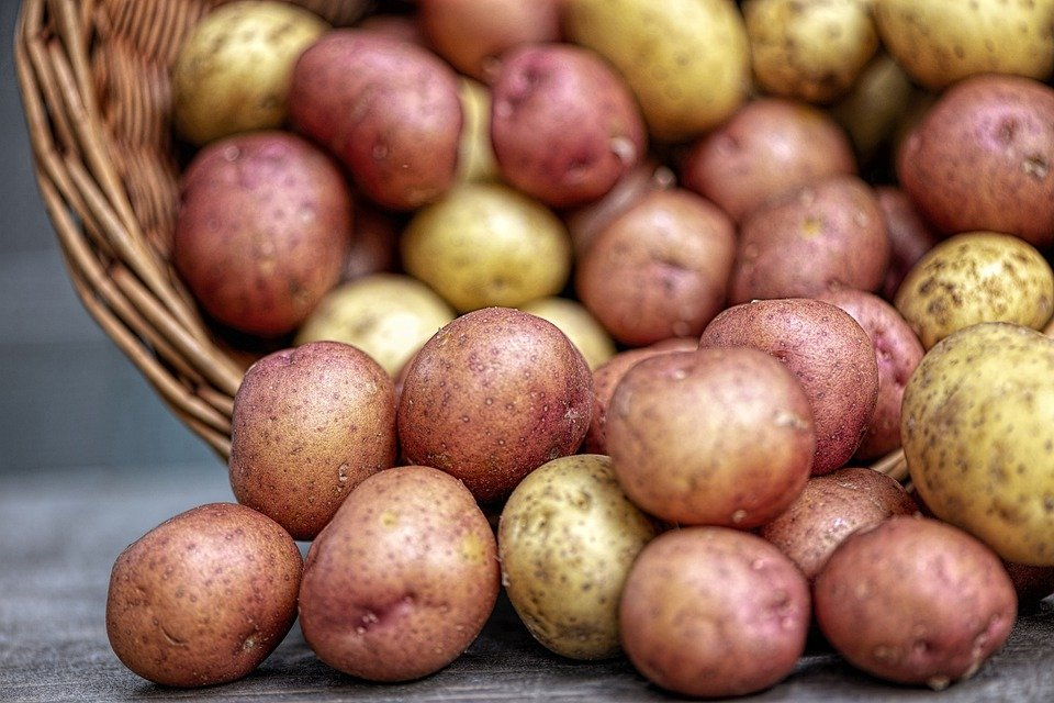 Red and gold potatoes in a basket