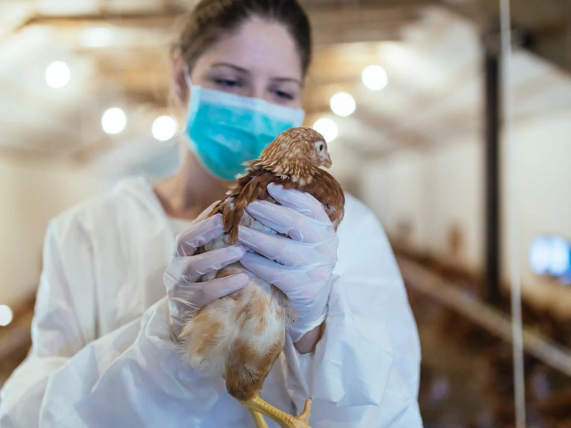 Russia Confirms First-Ever Case Of H5N8 Bird Flu Strain Being Passed To Humans