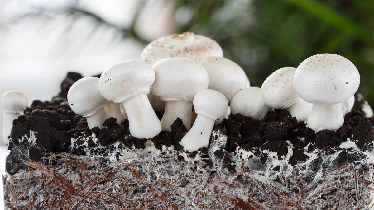 Ecovative uses mycelium to create textiles and food products for various companies