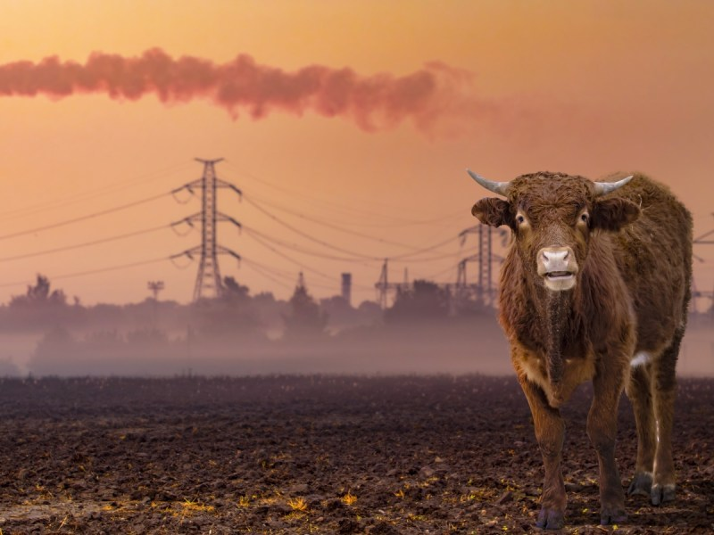 Animal Agriculture Responsible For Thousands of Air-Quality Related Deaths, Says Study