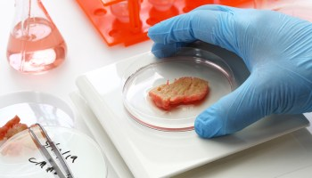 Cell-Cultured Meat Could Hit Grocery Stores In Next 5 Years, Predicts Expert