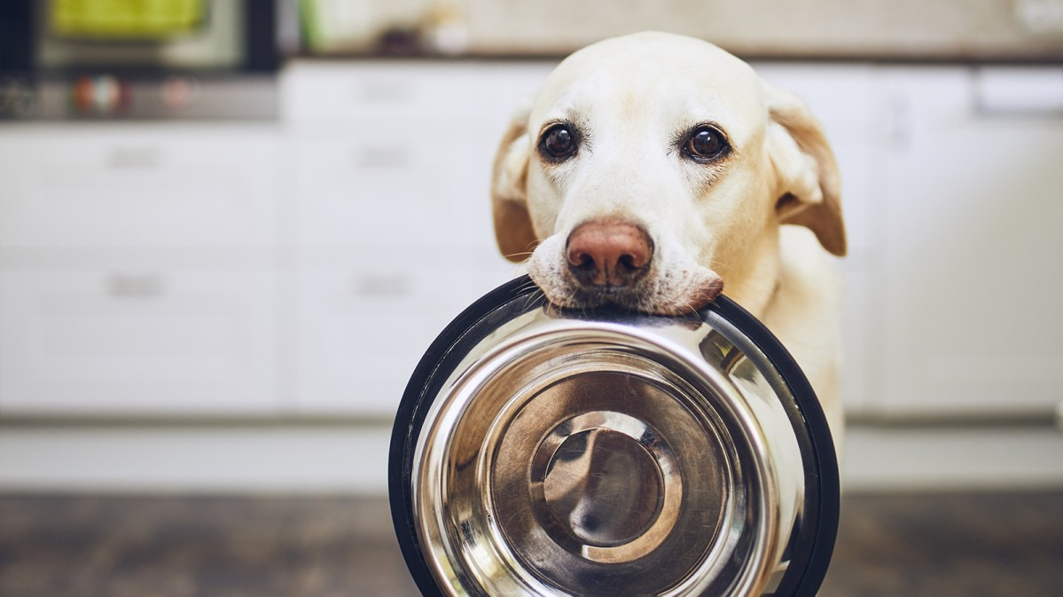 Cell-Cultured Pet Food Brand Lands Hefty Investment