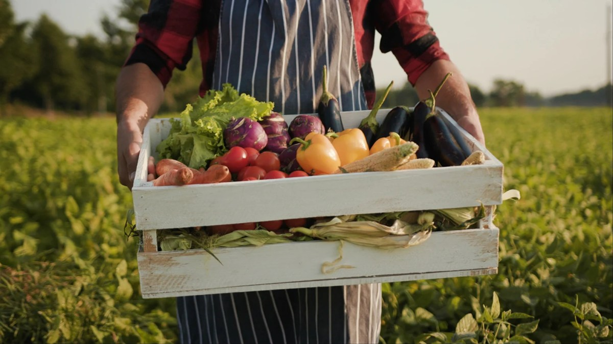 What is Organic food? Is organic food worth the price?