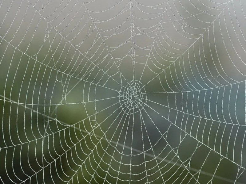 Vegan Spider Silk Could Replace Single-Use Plastic