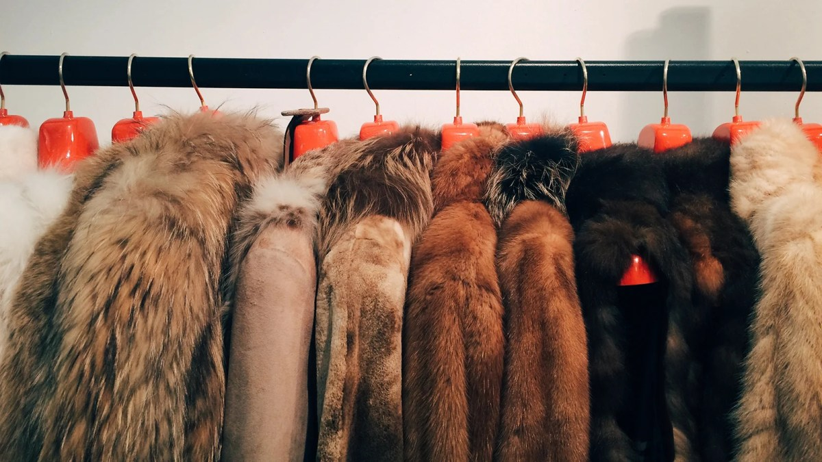 Israel Becomes World's First Country To Ban Fur Sales
