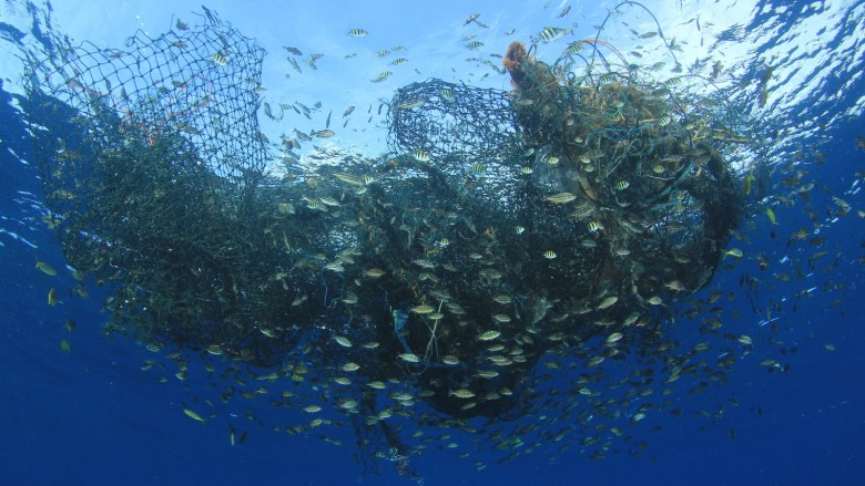 Fish surround a discarded fishing net in the ocean