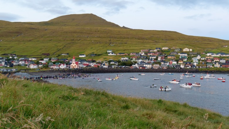 Locals whaling in the Faroe Islands