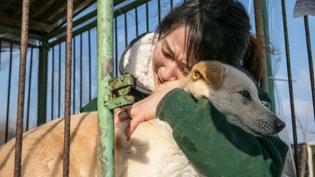 Moon Jae-in, president of South Korea, is hinting at banning the controversial dog meat trade across the country. This is with a view to boosting animal welfare systems, in a move welcomed by campaigners.