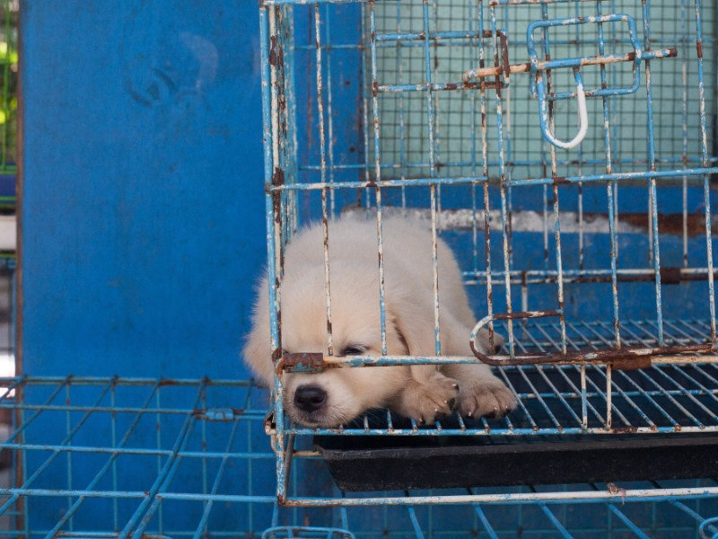 Indonesian court finds dog meat trader guilty with jail sentence