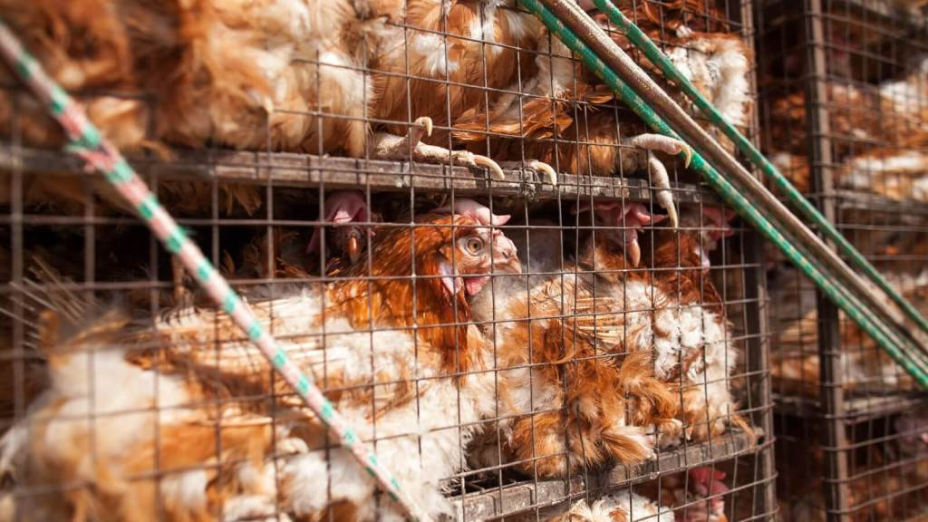 Federal Judge Accepts Animal Cruelty Lawsuit Against USDA, Case To Move Forward