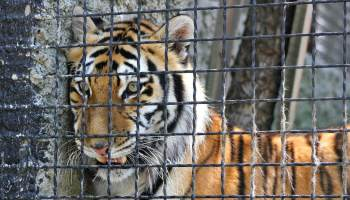 COVID-19 Pandemic Put Thousands Of Zoo Animals At Risk Due To Limited Care, Says Report