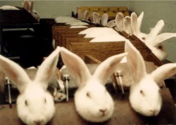 animal testing 3