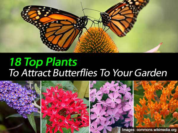 butterfly garden plants flowers 17 Top Blooming Plants For Your Butterfly Garden