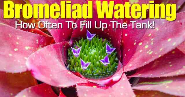 bromeliad cup filled with water
