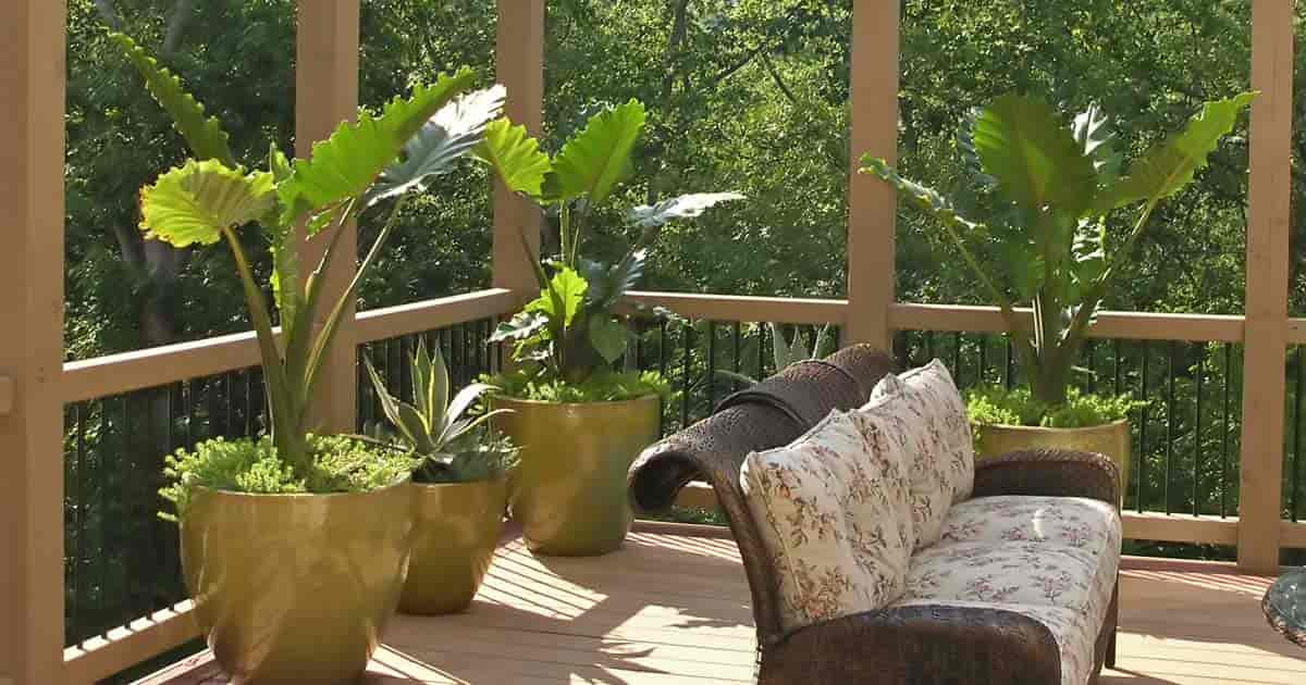 best patio plants for container gardening