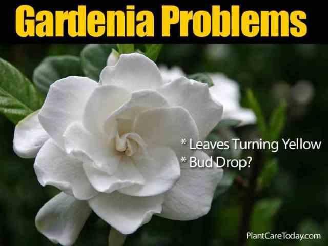 gardenoa-problems-073114