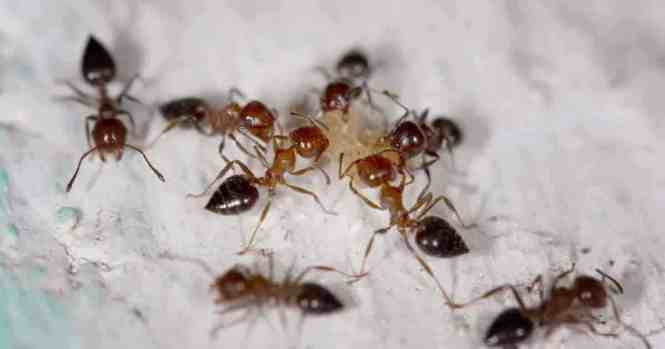 Ant Spray For Yard Grass Best Natural Killer
