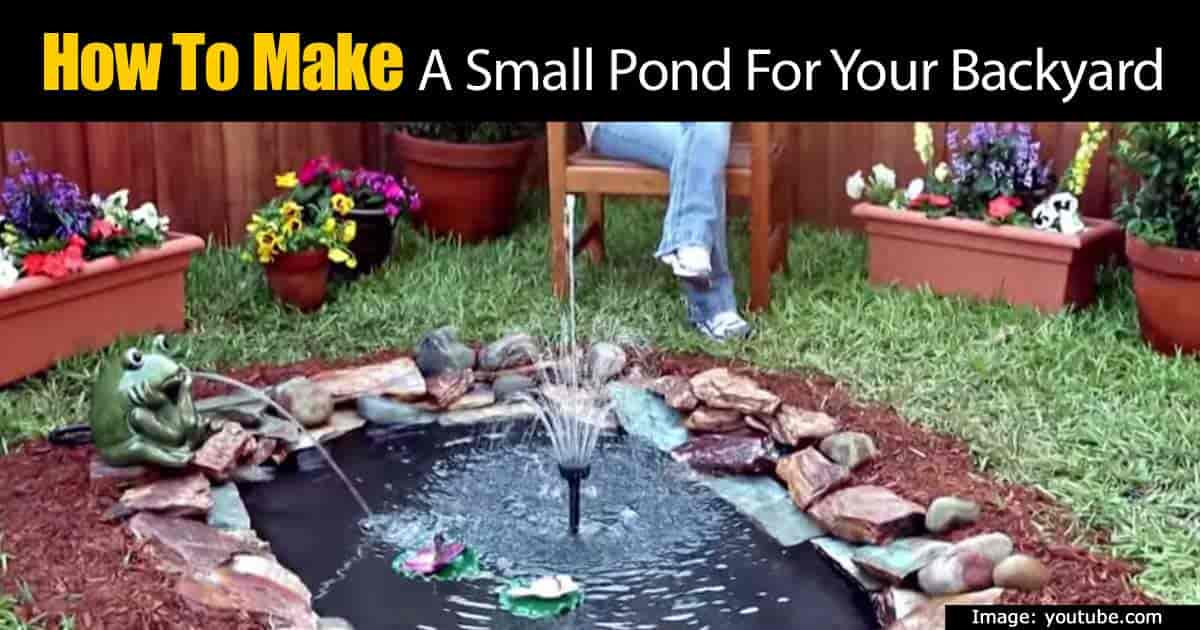 Build Small Pond Your Backyard