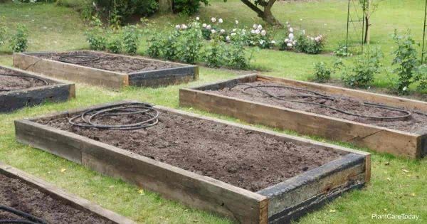 raised garden beds filled with soil preparing for planting