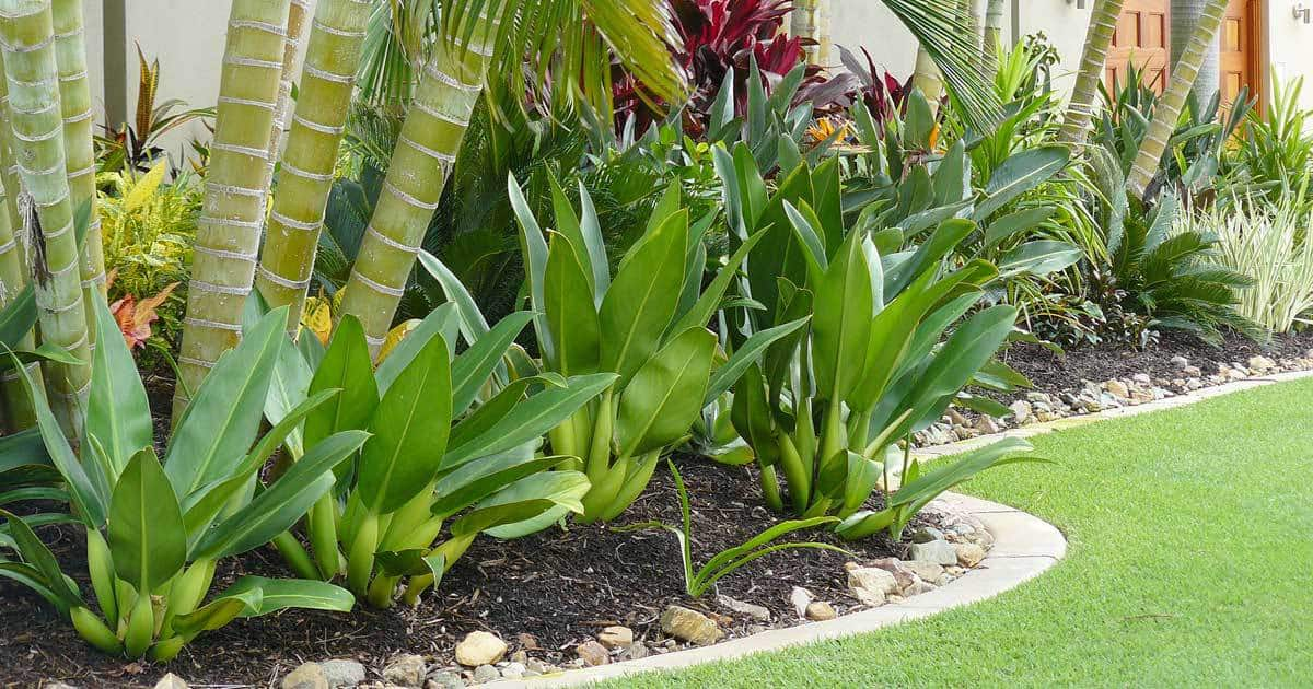 Tropical Landscaping Design - Create Your Own Getaway on Tropical Backyard Landscaping  id=52311