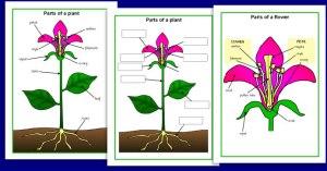 Plant Diagram  Plants Central