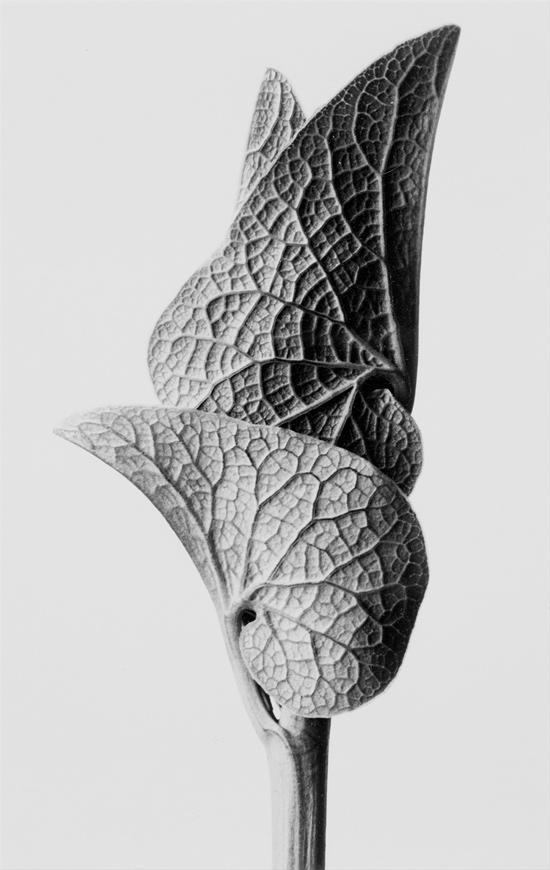 Botanical Artist
