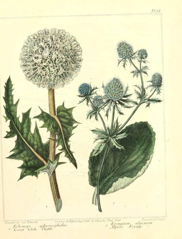Free Retro Vintage Botanical Art