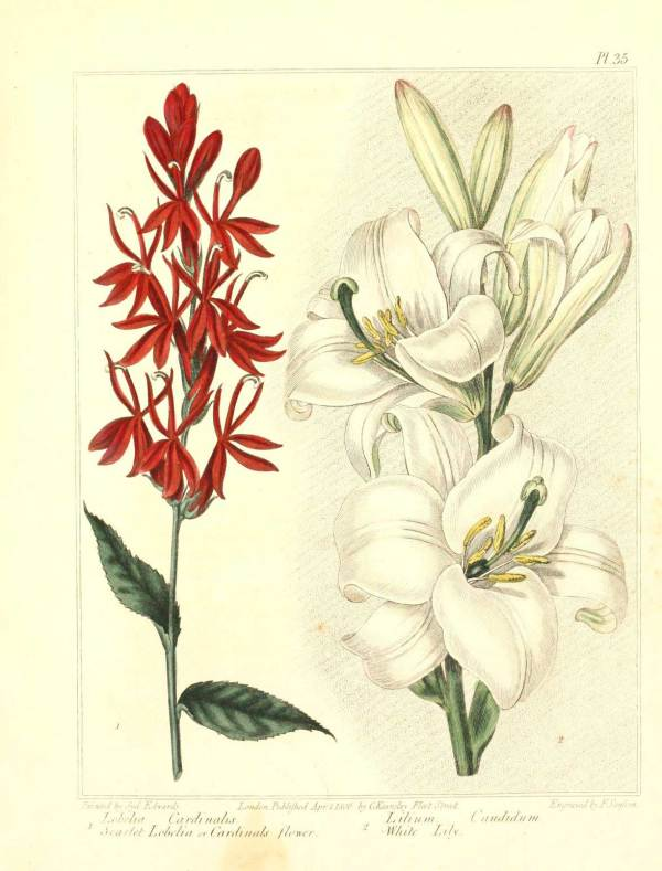 Vintage Retro Botanical Art