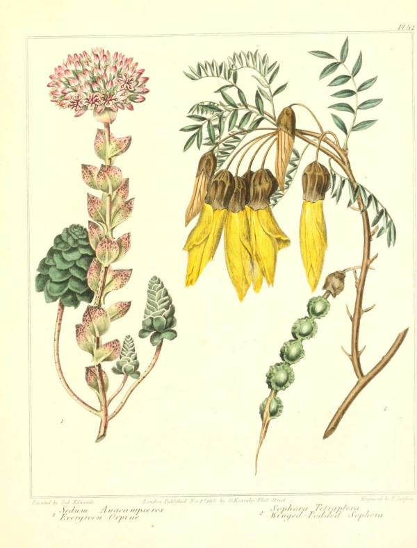 Retro Vintage Botanical Art