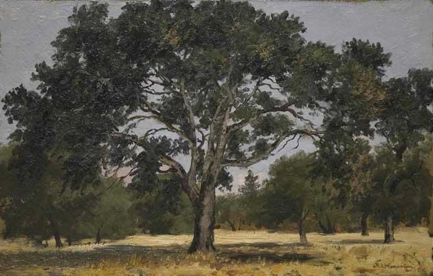 Annie Harmon, Oak, Menlo Park, ca. 1900-1914