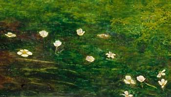crow flowers