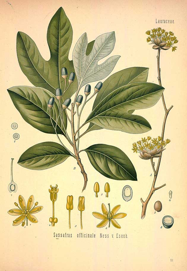 Free Medicinal plant illustrations