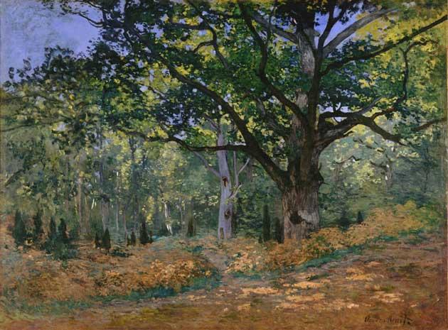 The bodmer oak