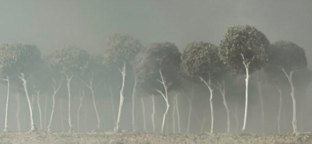 magic tree photos