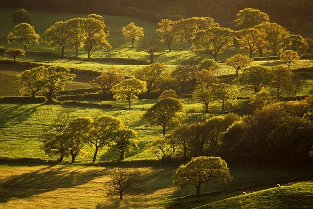 great tree photos