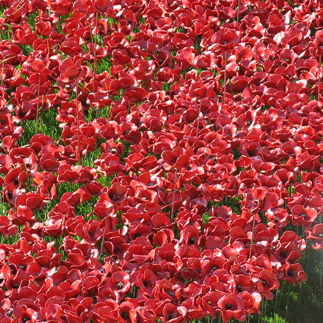 Poppy installation Tower Hill