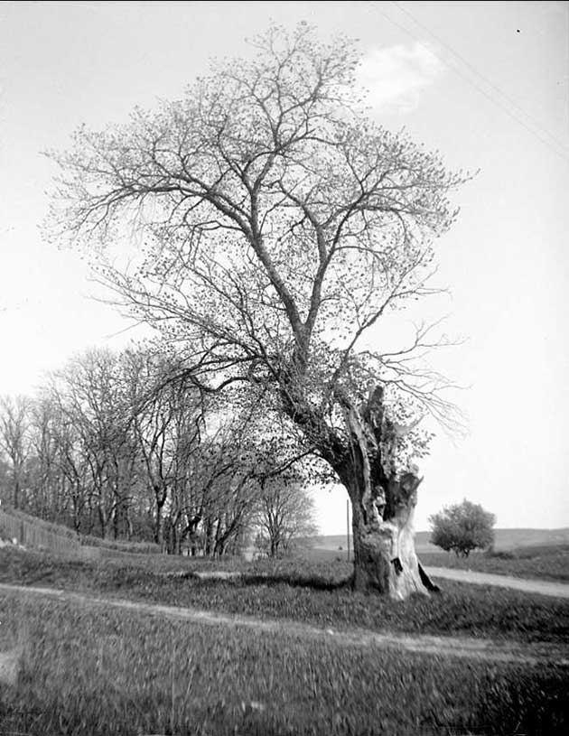 Black and white tree landscape