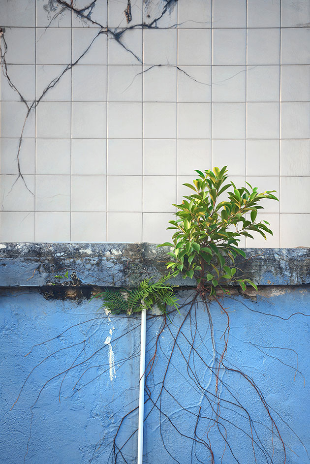 Plants from concrete
