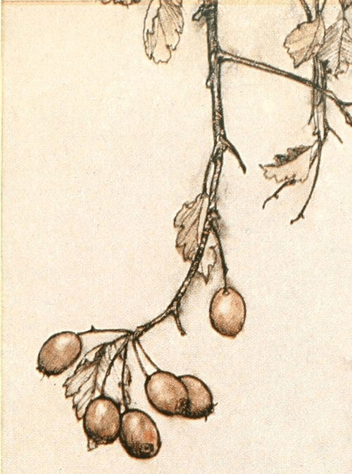 botanical details of artwork
