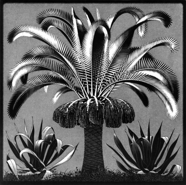 palm by escher