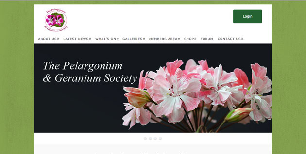 Pelargonium plant society