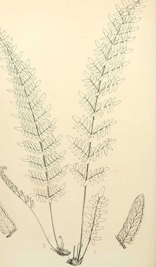 Free plant art