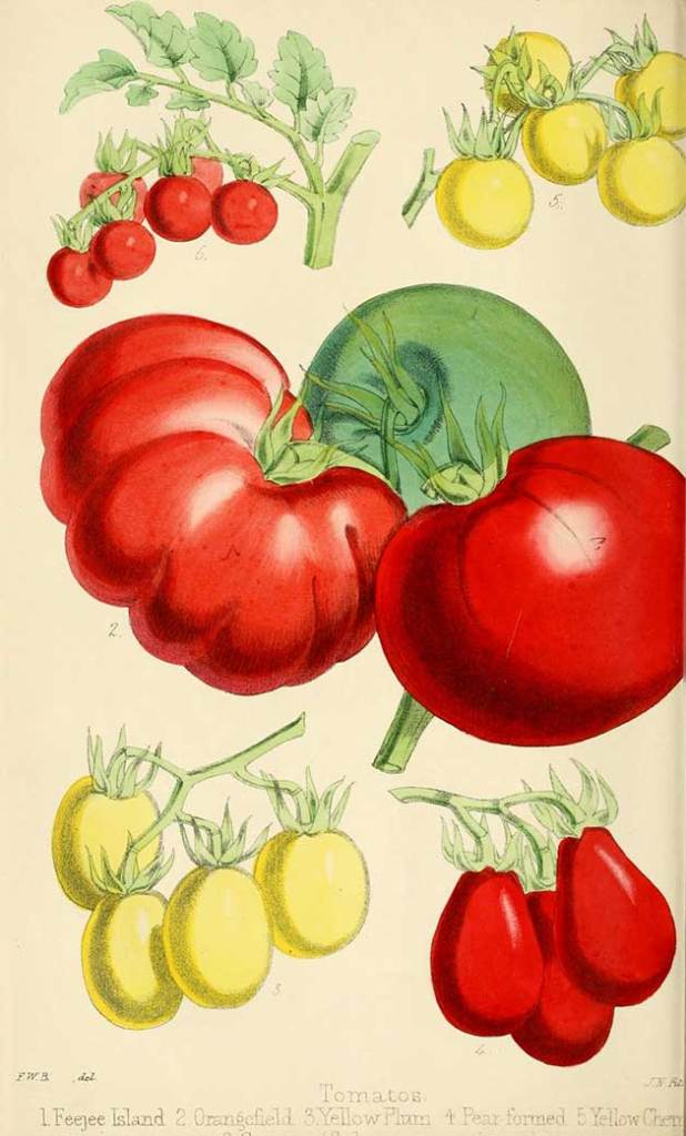Vintage botanical fruit
