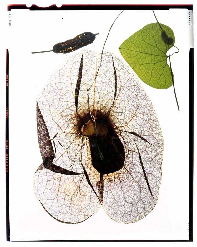 Botanical photography