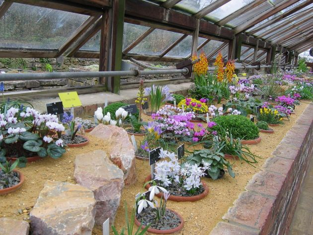 Top 5 plant events: Alpine house RHS Wisley