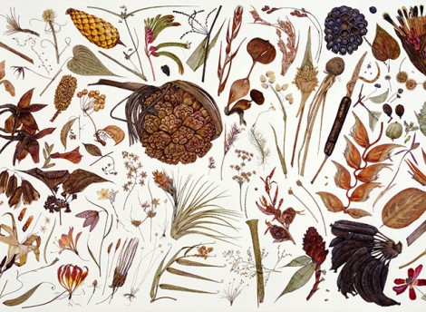 Rachel Pedder-Smith brings life to dried plant specimens