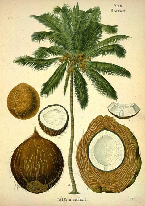 80 free vintage medicinal plant illustrations