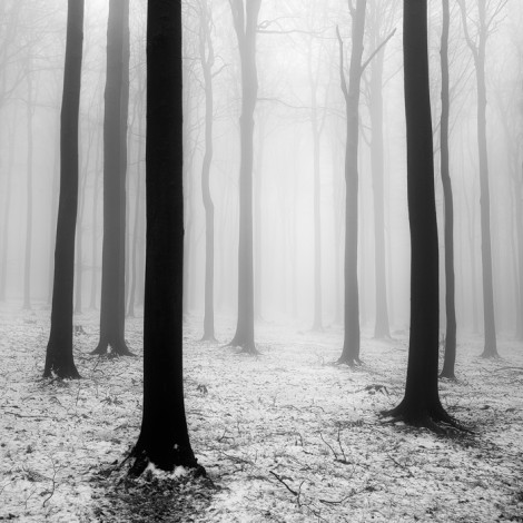 Five photographs capture the magic of trees