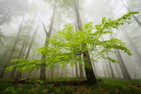 Martin Rak finds silence in the trees