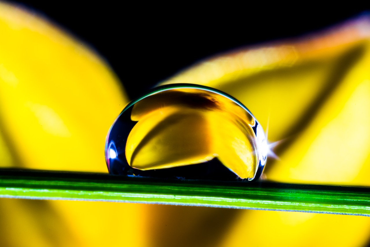 Le choix des 50 huiles essentielles : les 5 indispensables de la trousse d'aromathérapie familiale